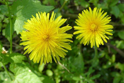 Read more about the article Primavera… il risveglio del nostro organismo